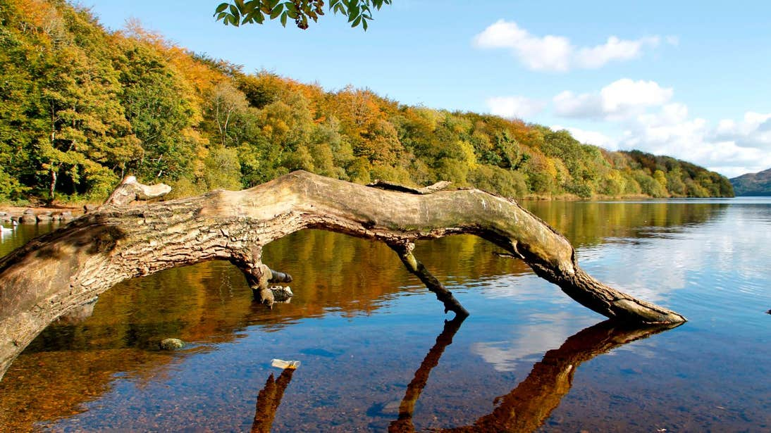 An old tree branch in a lake at Hazelwood National Forest in Sligo.