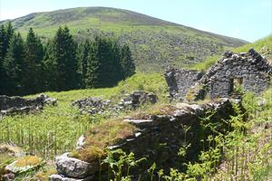 Walkabout Wicklow - Guided Walks and Tours in Ireland