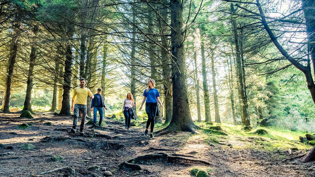 A group of friends hiking through a Dublin forest with an uneven terrain and tall trees