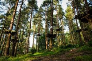 Zipit Tibradden Wood Ltd.