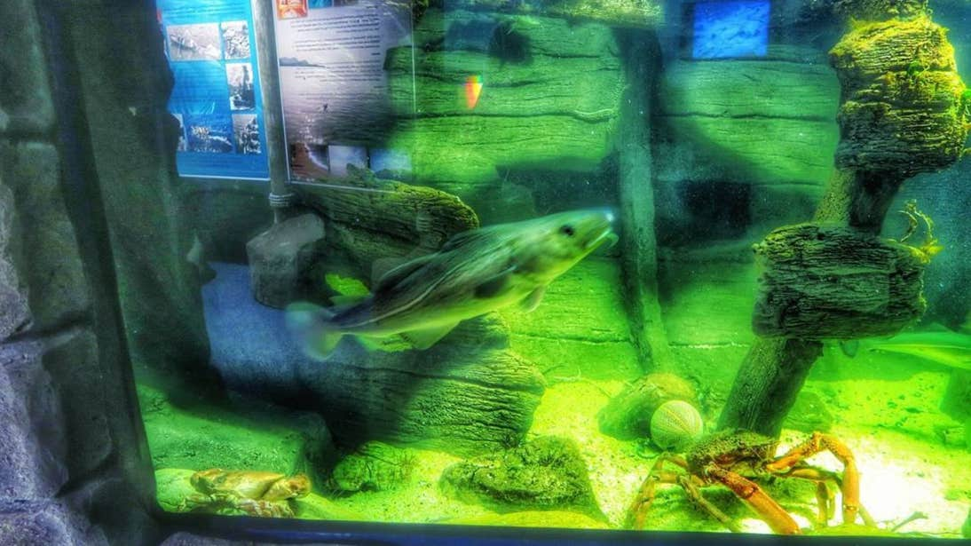 Fish swimming in a tank at Achill Experience Aquarium, Mayo