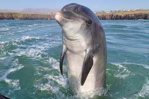 Fungie the dolphin