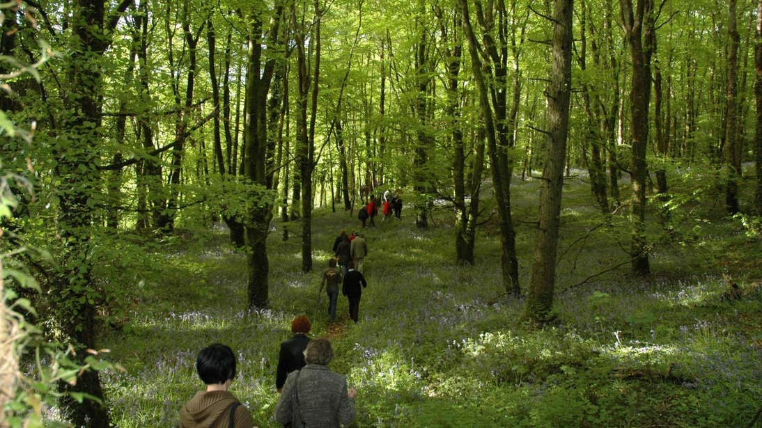 Walking through the forest in Slieve Bloom, Laois