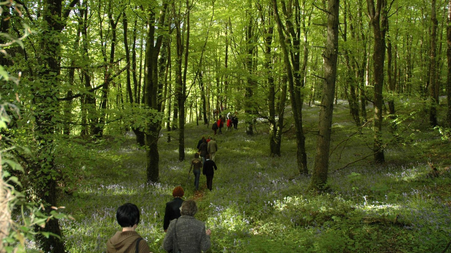 Explore the magical woods on Slieve Bloom.