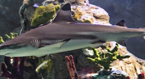 Sea Life Aquarium Bray
