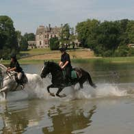 Horses galloping at Castle Leslie Equestrian Centre Glaslough County Monaghan