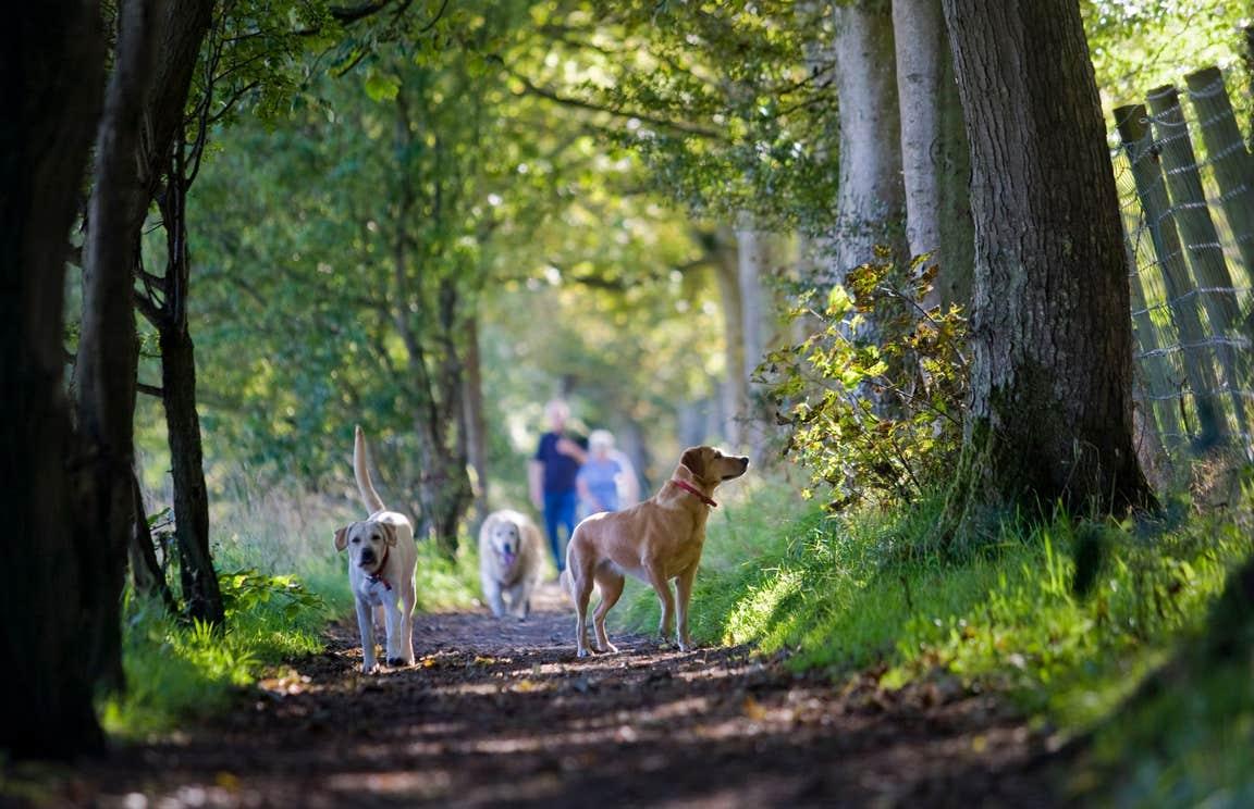 Dogs walking through Carnfunnock Country Park in Antrim.