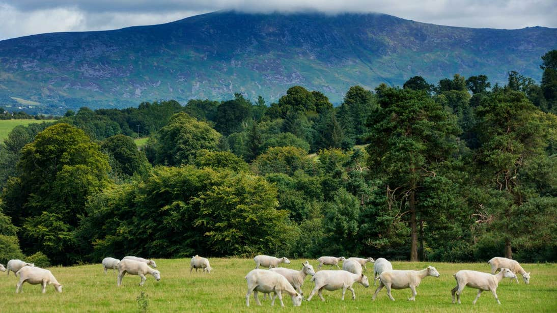 Blackstairs Mountains County Carlow