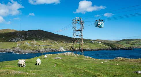 Sheep eating grass beneath Dursey Island Cable Car in Cork