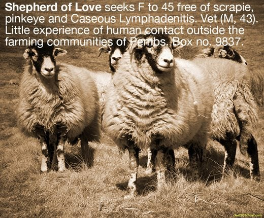 Image saying:  Shepherd of Love seeks F to 45 free of scrapie,pinkeye and Caseous Lymphadentis. Vet (M, 43). Little experience of human contact outside the farming communities of Pembs. Box no. 9837.
