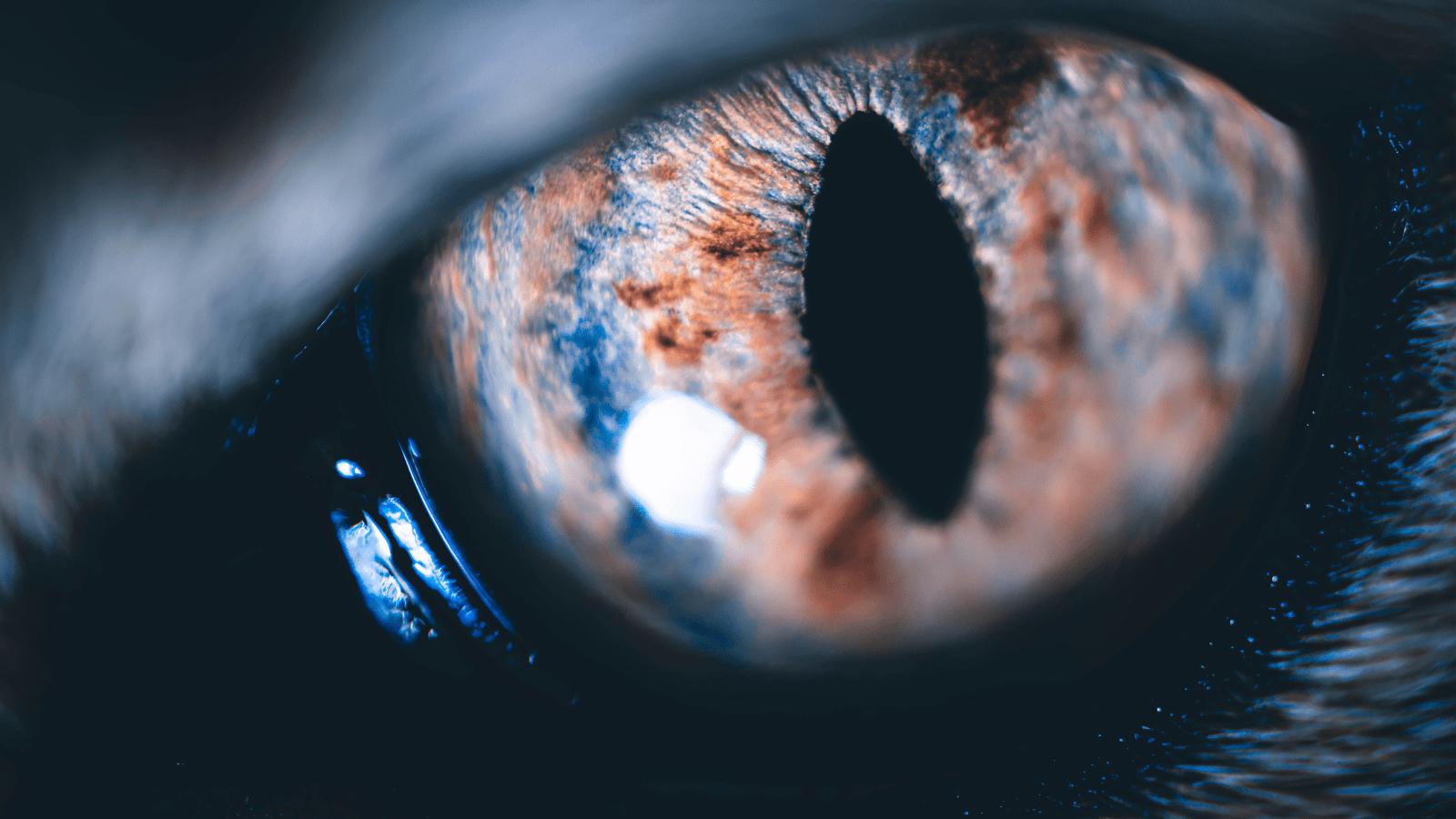 Cat eye up close