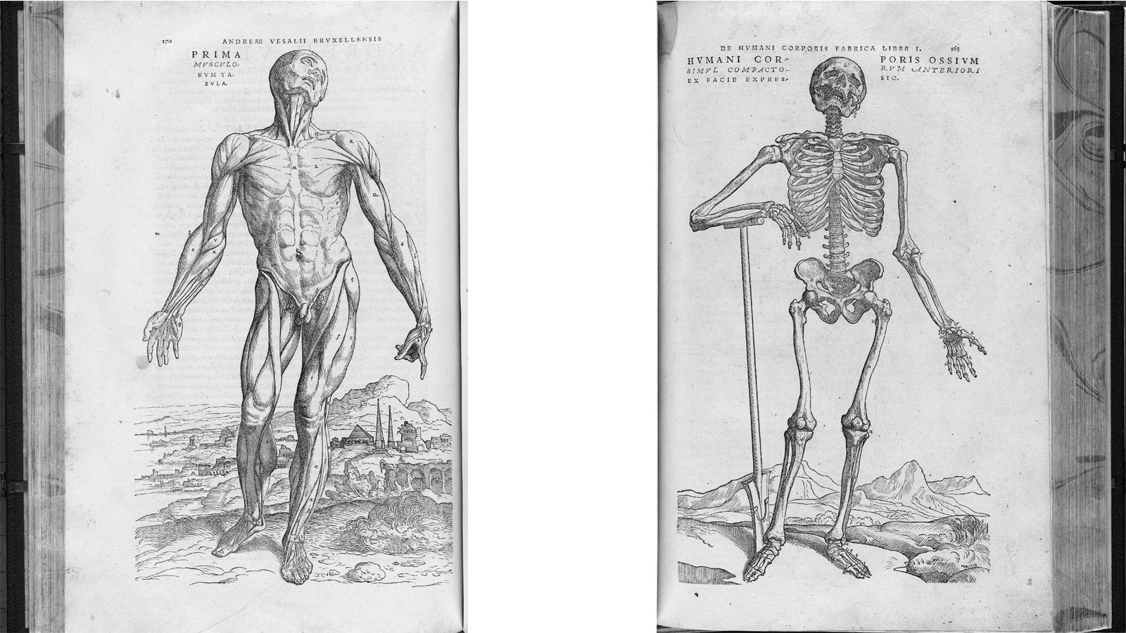 Black and white drawings of two human bodies from De humani Corporis Fabrica book. One stripped of it's skin displaying muscles, the other as a skeleton