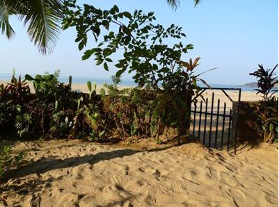 Beach in Goa with metal gate and tropical plants