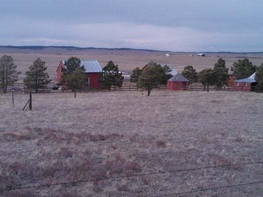 Red barns through the trees