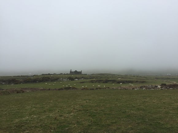 A field, with sheep in the background and beyond them the ruin of a cottage in the distance surrounded by thick fog