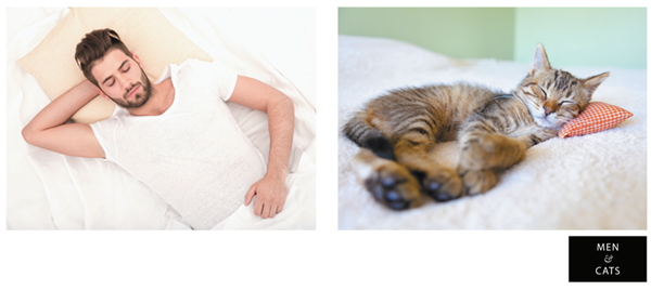 men-and-cats-1-1_png_600_268.png