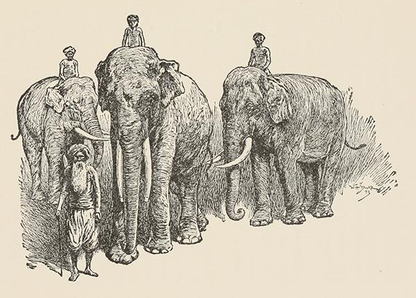"Kala Nag stood ten fair feet at the shoulder – from ""Toomai of the Elephants""."