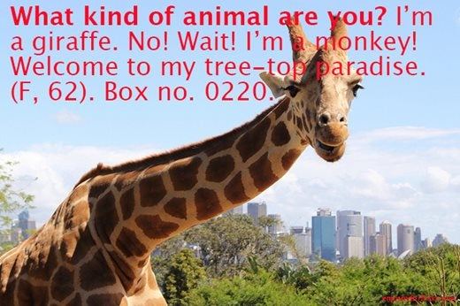 Image saying: What kind of animal are you? I'm a giraffe. No! Wait! I'm a monkey! Welcome to my tree-top paradise. (F, 62) Box no. 0220.