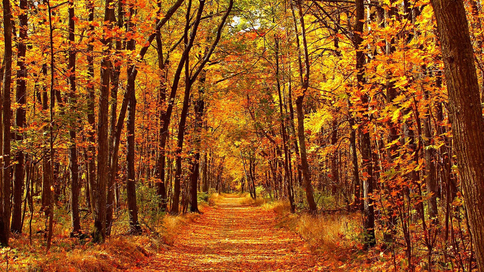 Path in forest in Autumn