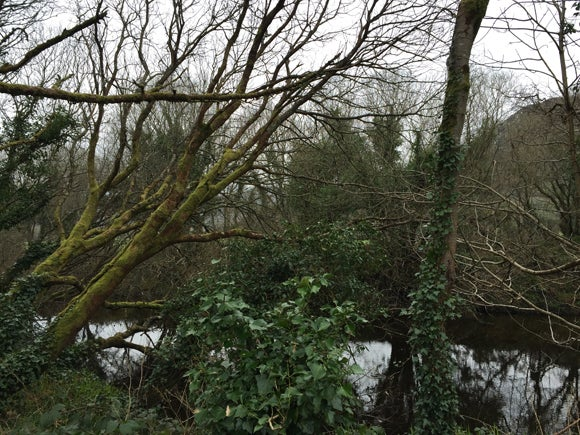 Overgrown woodland and trees over a small river on a cloudy day