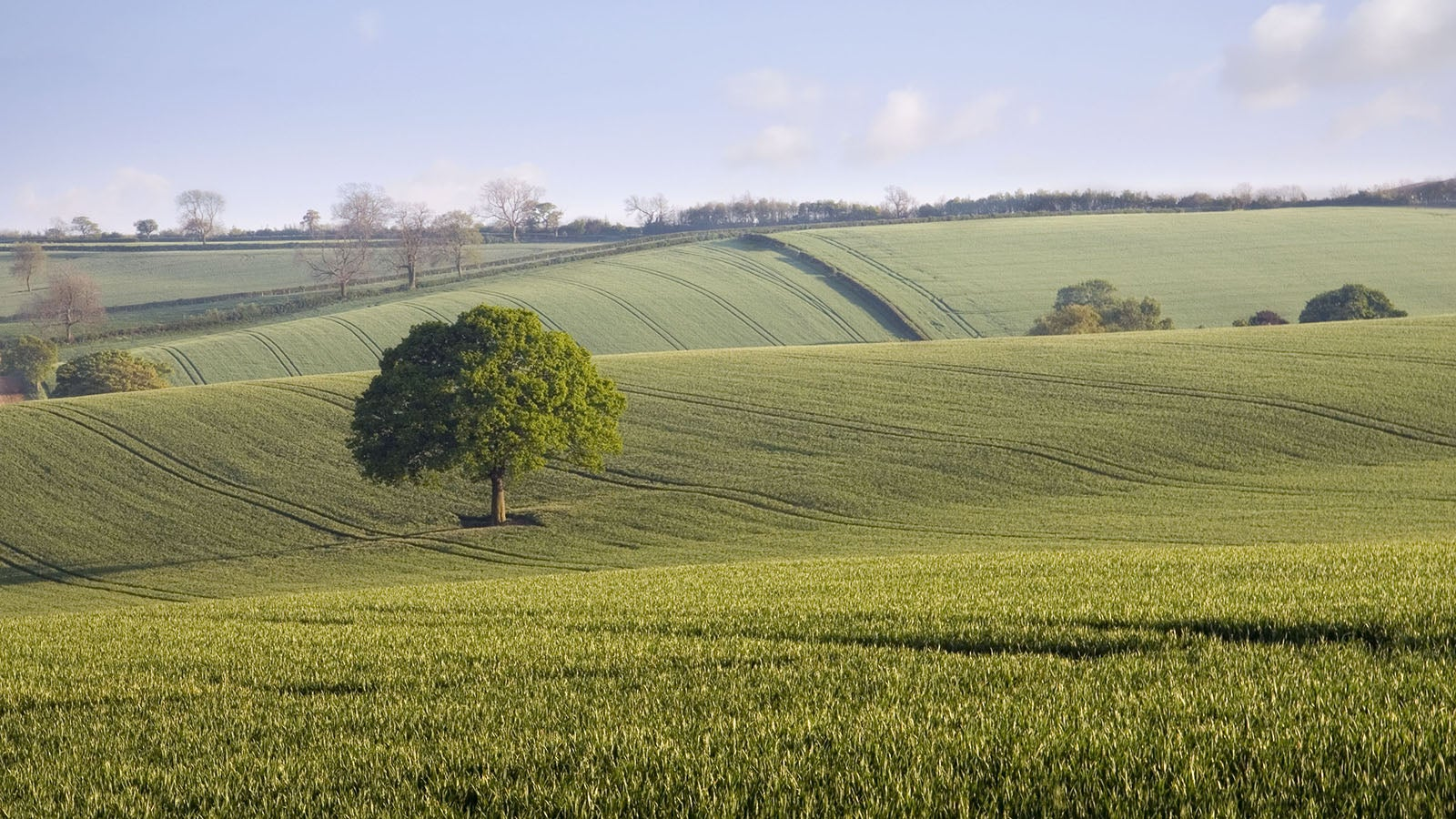 A photo of the green countryside with trees dotted about