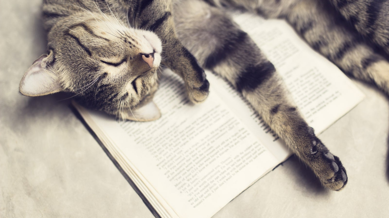 Peaceful cat laying on a book.