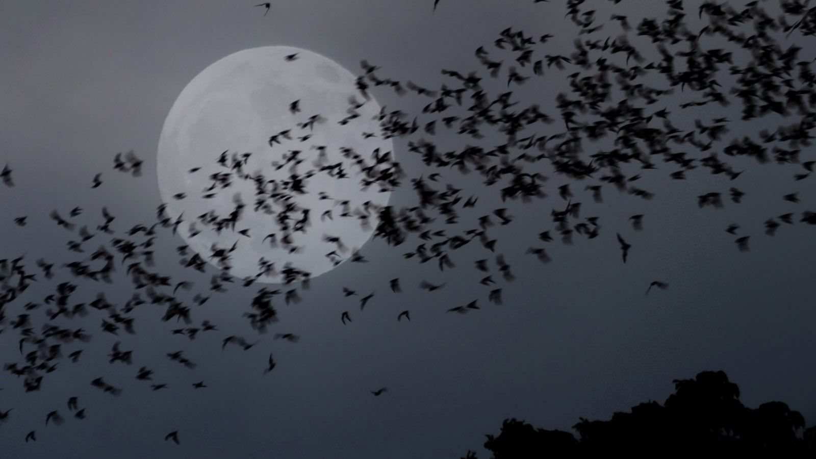 Bats flying in front of a full moon