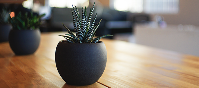 Succulents in round grey plant pots on a wooden table