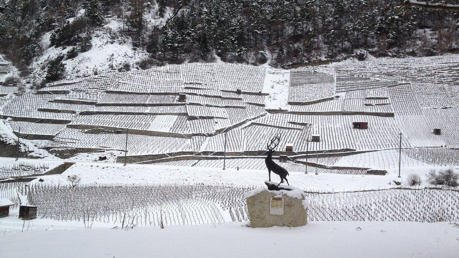 Rhône Valley in the snow