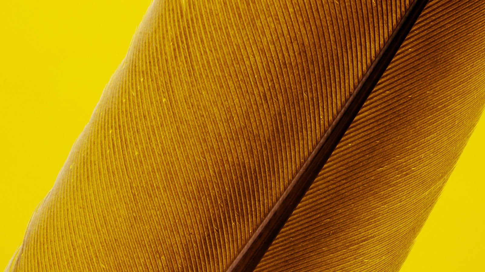 close up of yellow feather