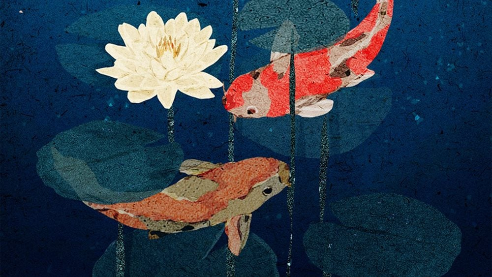 Two orange koi carp and waterlily illustration
