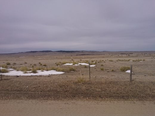 Yucca on the plains