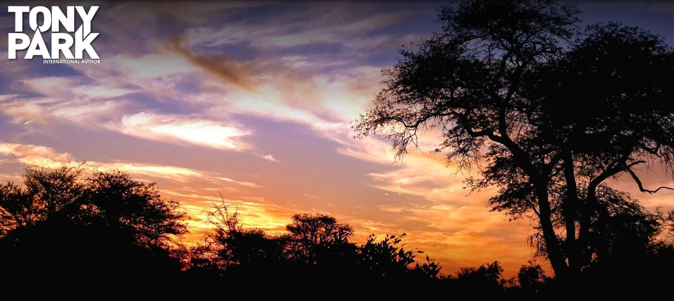 Image showing a sunset sky with trees in shadows.