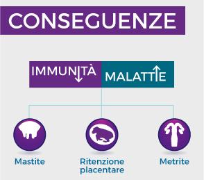 L'immunosoppressione nel periodo intorno al parto può rendere le bovine più vulnerabili alle malattie infettive della transazione