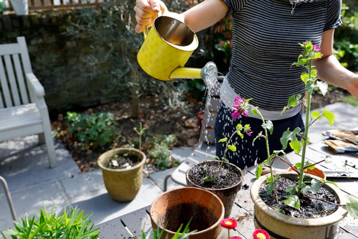 A close up image of a person watering potted plants with a yellow watering can