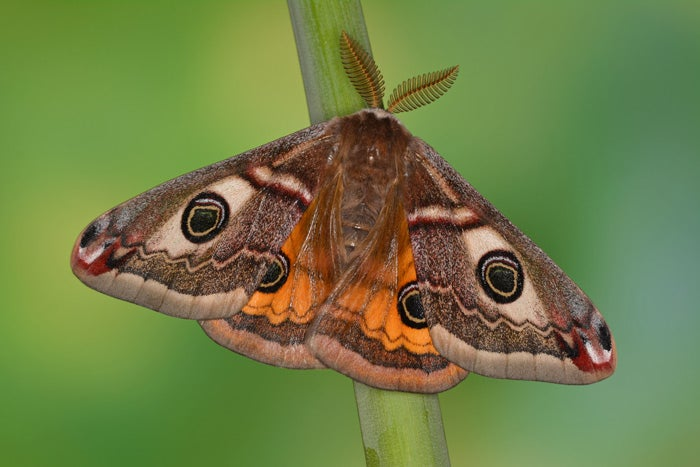 A close up shot of a moth sitting on a blade of grass