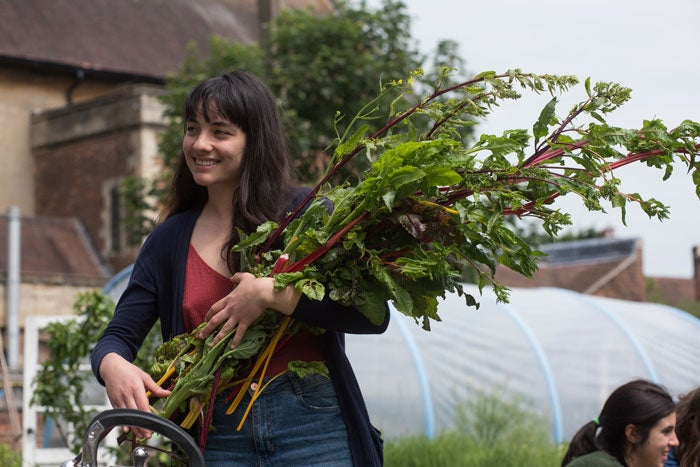 A person holding a bunch of rhubarb