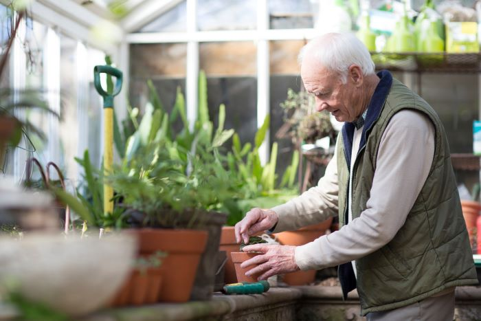 An older man planting in a greenhouse