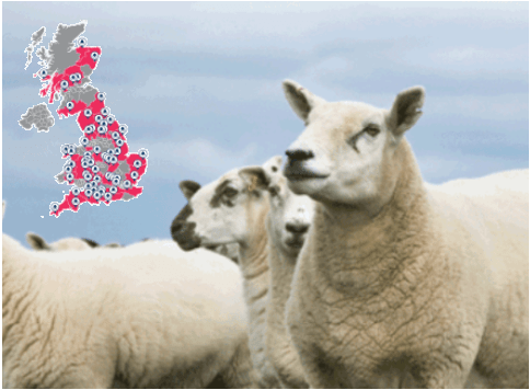 Sheep Blowfly Strike Tracker