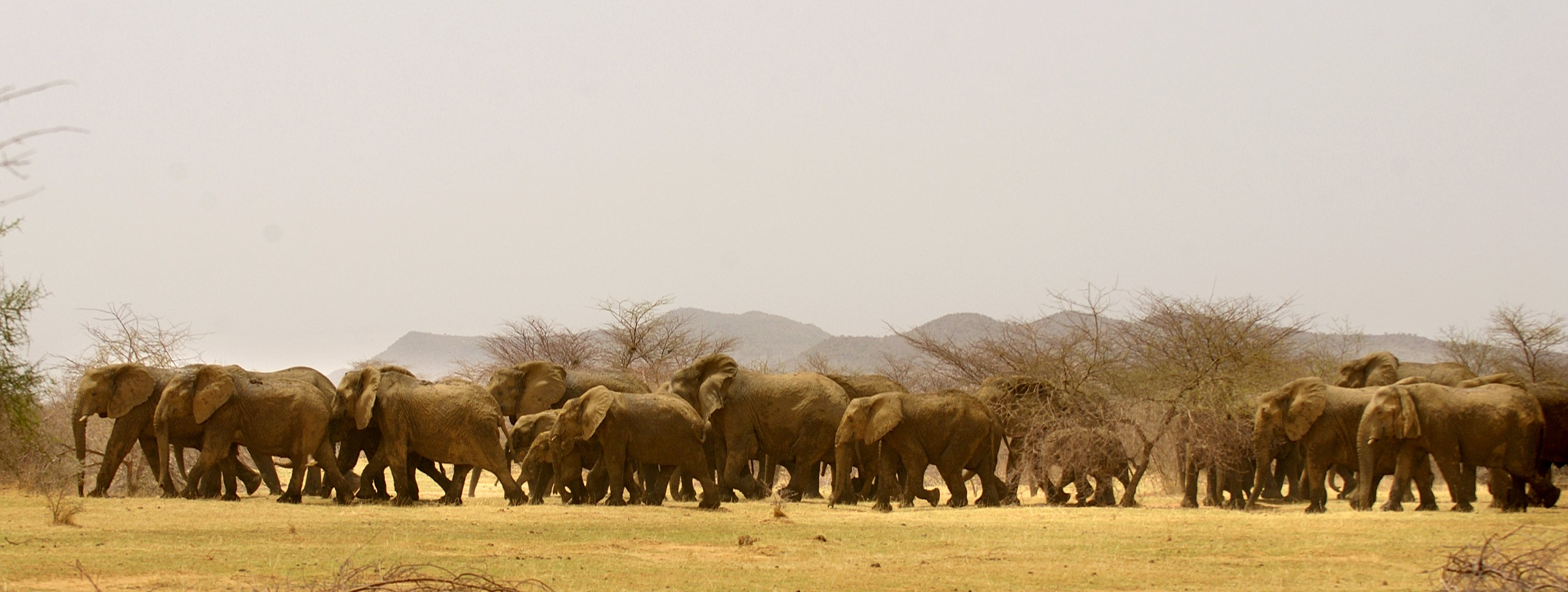 The Gourma Elephants (Credit: Carlton Ward Jr)