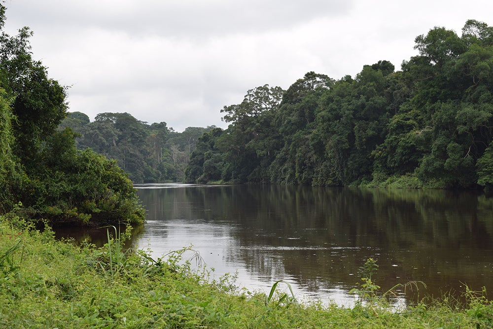 The Dja River, south of the Dja Faunal Reserve in Cameroon.