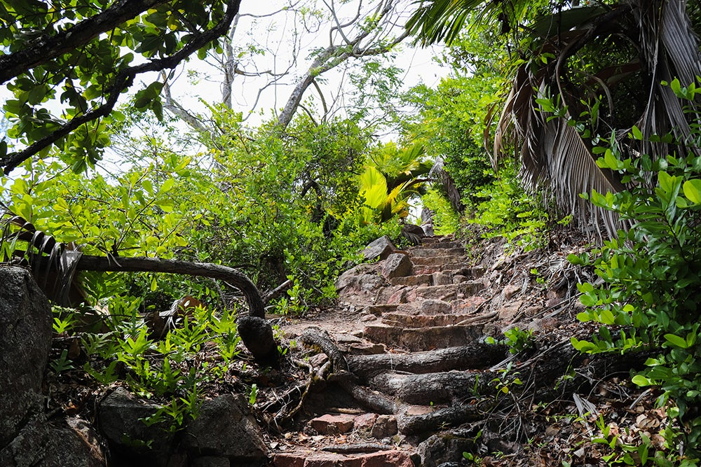 Comoros forest path. Credit: Shutterstock.